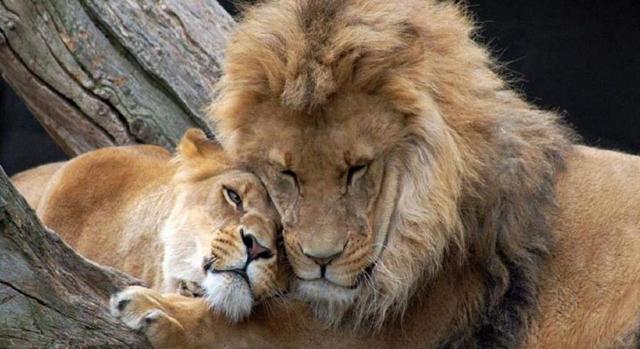 вакансии работа под знаком льва рождаются великие люди окрашивания волос черный